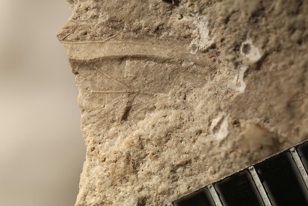 http://mczbase.mcz.harvard.edu/specimen_images/entomology/paleo/large/PALE-32728_Pterygota.jpg