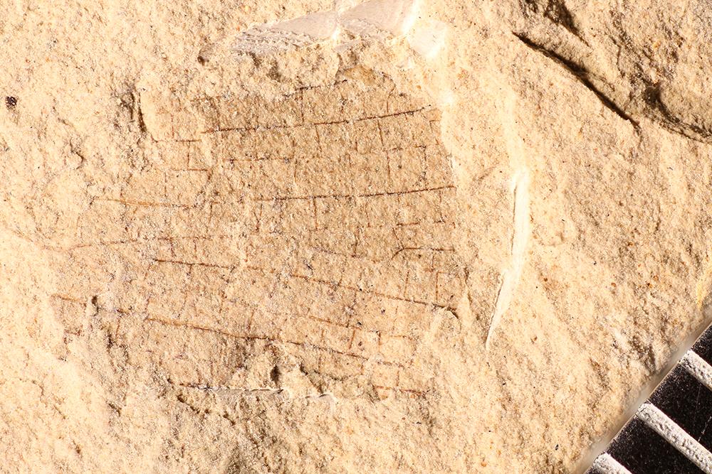 http://mczbase.mcz.harvard.edu/specimen_images/entomology/paleo/large/PALE-32790_Ephemeroptera.jpg