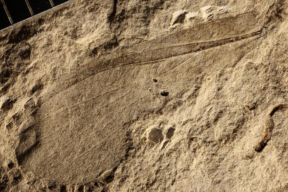 http://mczbase.mcz.harvard.edu/specimen_images/entomology/paleo/large/PALE-4919_Chelopterum_peregrinum.jpg