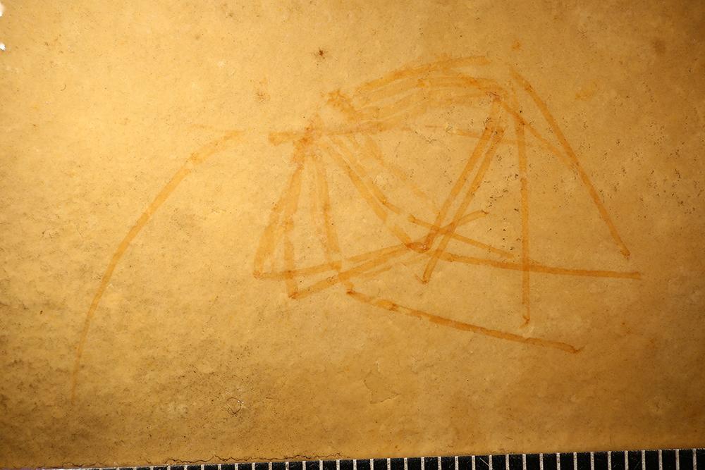 http://mczbase.mcz.harvard.edu/specimen_images/entomology/paleo/large/PALE-5992_Arthropoda.jpg