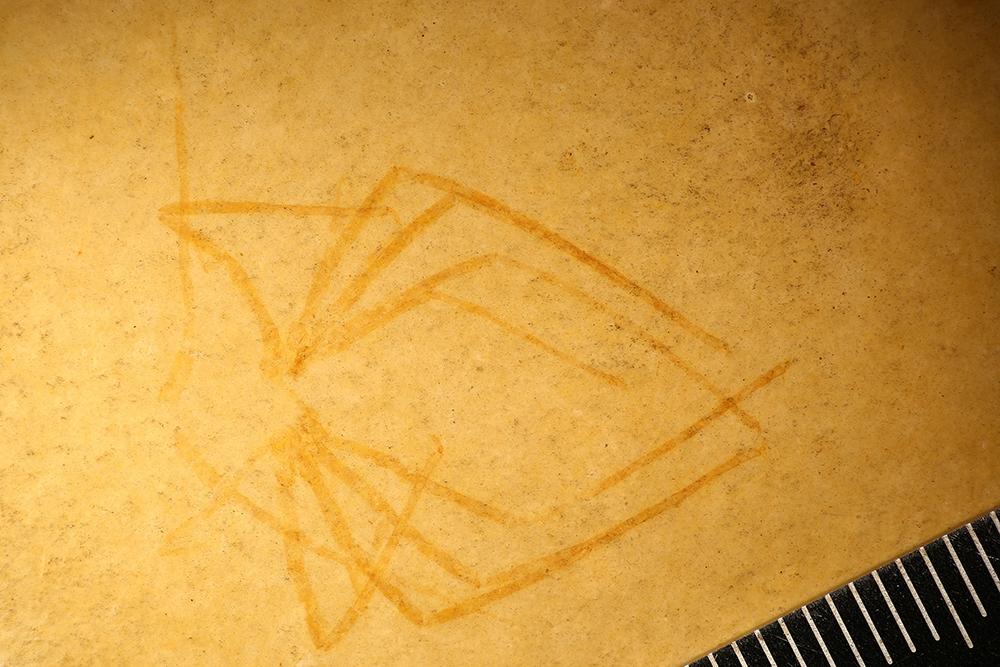 http://mczbase.mcz.harvard.edu/specimen_images/entomology/paleo/large/PALE-6006_Arthropoda.jpg