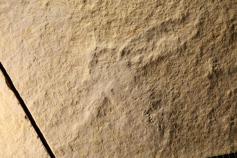 http://mczbase.mcz.harvard.edu/specimen_images/entomology/paleo/large/PALE-6038_Lithoblatta_lithophila.jpg