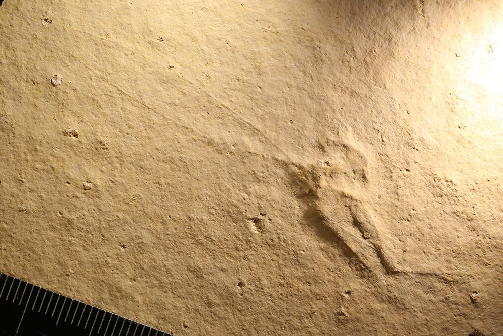 http://mczbase.mcz.harvard.edu/specimen_images/entomology/paleo/large/PALE-6068_Orthoptera.jpg