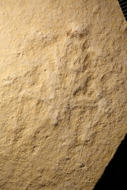 http://mczbase.mcz.harvard.edu/specimen_images/entomology/paleo/large/PALE-6165_Orthoptera_(cp_6166).jpg
