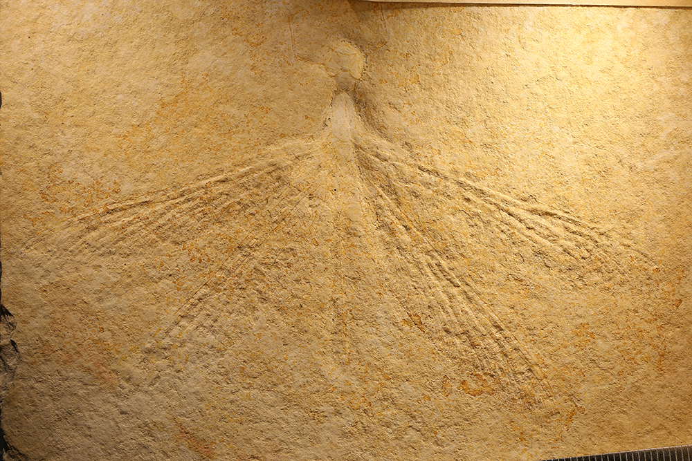 http://mczbase.mcz.harvard.edu/specimen_images/entomology/paleo/large/PALE-6211_Stenophlebia_latreillei_1.jpg