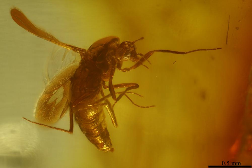 http://mczbase.mcz.harvard.edu/specimen_images/entomology/paleo/large/PALE-6981_Chironomidae.jpg