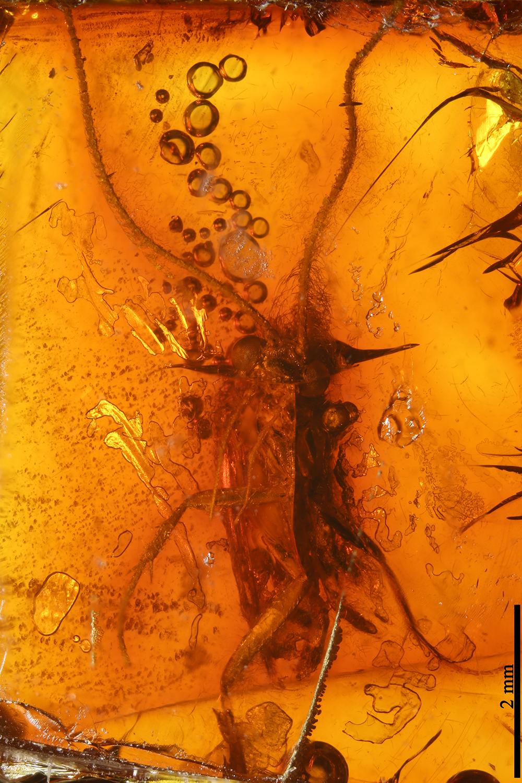 http://mczbase.mcz.harvard.edu/specimen_images/entomology/paleo/large/PALE-7073_Trichoptera.jpg
