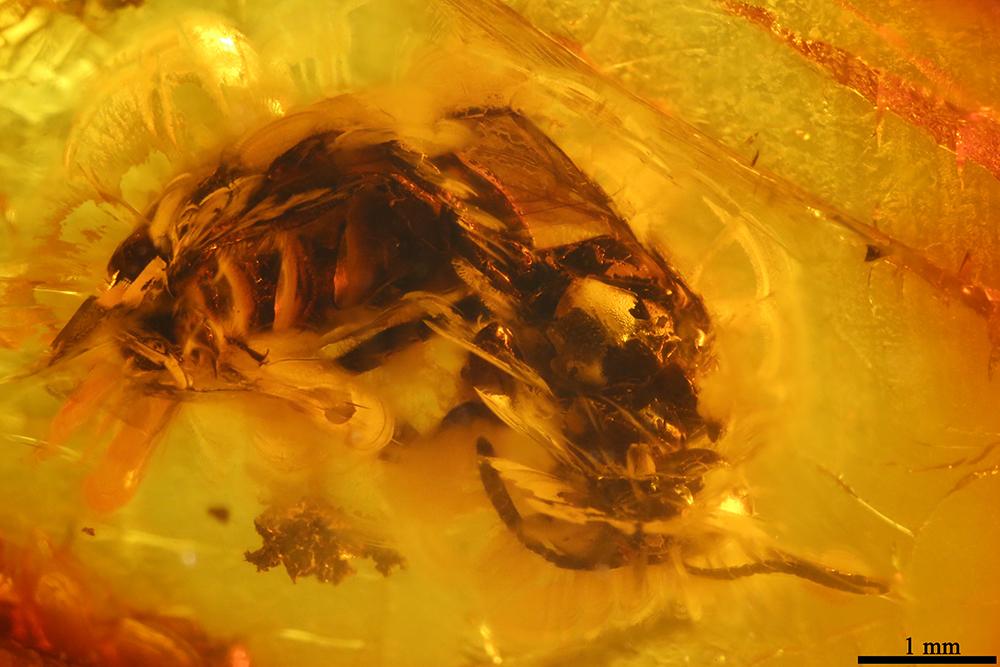 http://mczbase.mcz.harvard.edu/specimen_images/entomology/paleo/large/PALE-7673_Hymenoptera.jpg