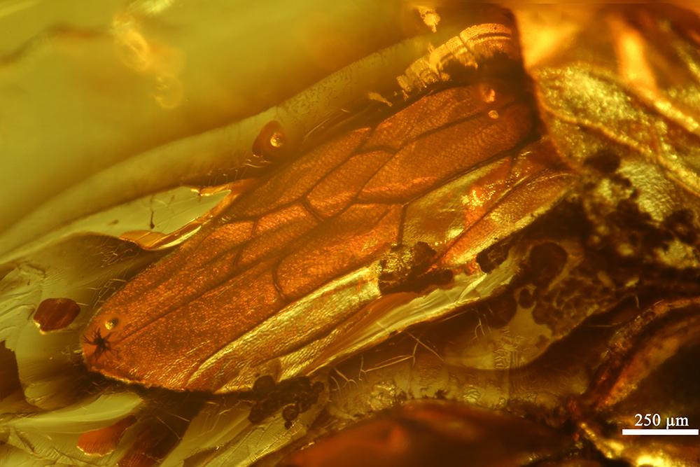 http://mczbase.mcz.harvard.edu/specimen_images/entomology/paleo/large/PALE-7674_Pompilidae_2.jpg