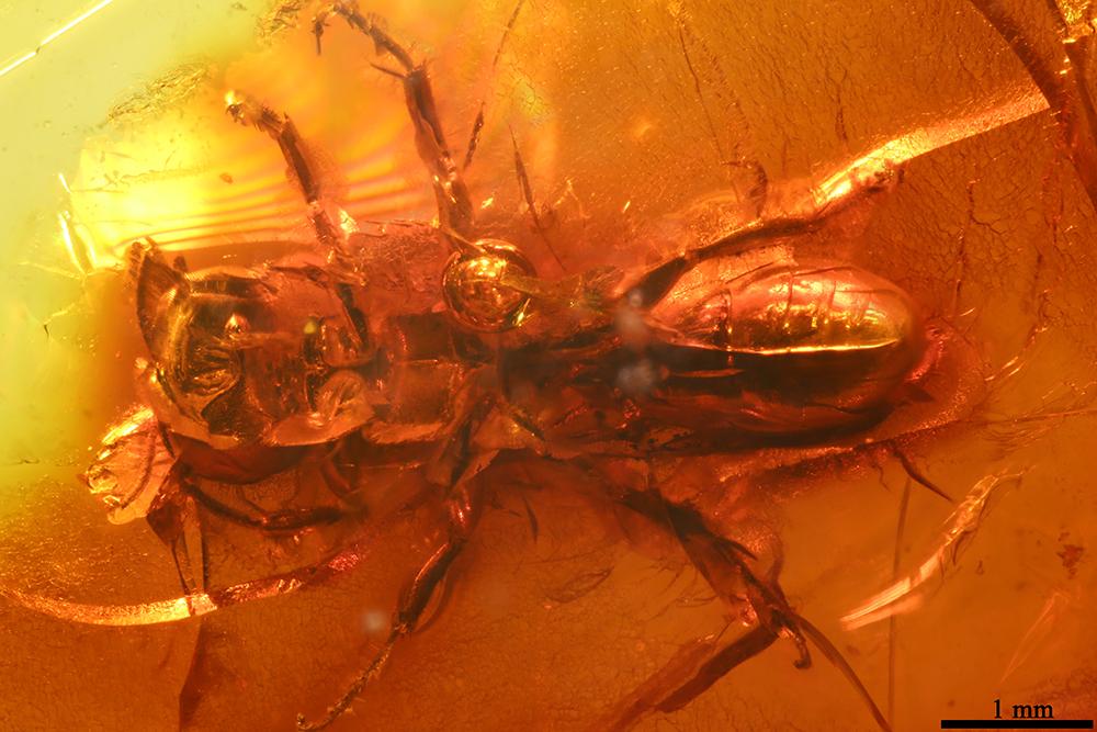 http://mczbase.mcz.harvard.edu/specimen_images/entomology/paleo/large/PALE-7715_Crabronidae_1.jpg