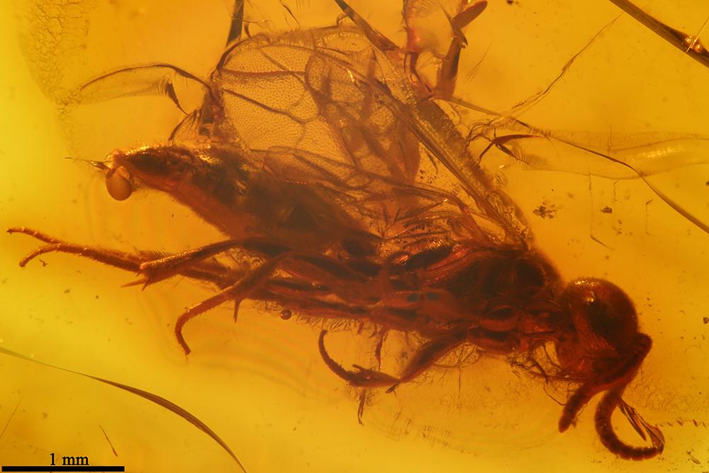 http://mczbase.mcz.harvard.edu/specimen_images/entomology/paleo/large/PALE-7725_Hymenoptera.jpg