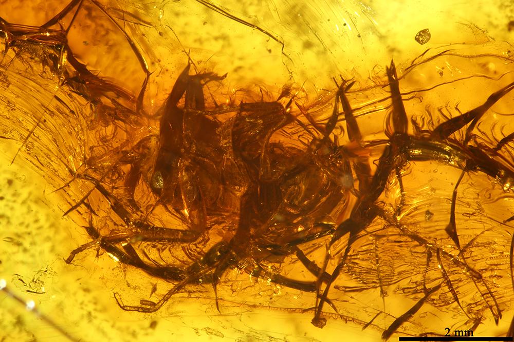 http://mczbase.mcz.harvard.edu/specimen_images/entomology/paleo/large/PALE-8399_Blattaria.jpg