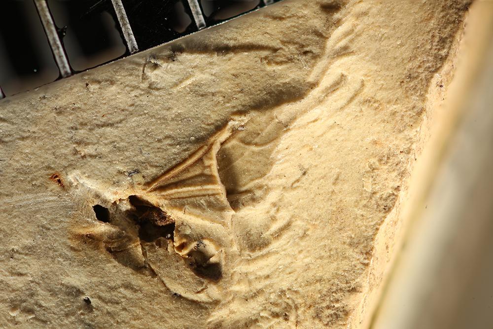 http://mczbase.mcz.harvard.edu/specimen_images/entomology/paleo/large/PALE-8777_Hymenoptera.jpg