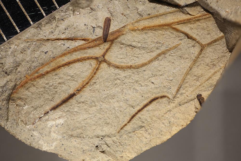 http://mczbase.mcz.harvard.edu/specimen_images/entomology/paleo/large/PALE-8780_Formicidae_qm.jpg