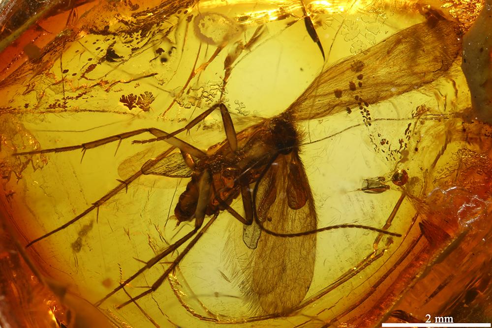 http://mczbase.mcz.harvard.edu/specimen_images/entomology/paleo/large/PALE-9056_Trichoptera.jpg