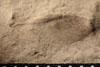 http://mczbase.mcz.harvard.edu/specimen_images/entomology/paleo/large/PALE-10048_Lemmatophora_typa_etho.jpg