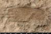 http://mczbase.mcz.harvard.edu/specimen_images/entomology/paleo/large/PALE-10051_Lemmatophora_typa_etho.jpg