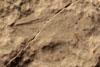 http://mczbase.mcz.harvard.edu/specimen_images/entomology/paleo/large/PALE-10055_Lemmatophora_typa_etho.jpg