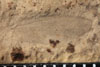 http://mczbase.mcz.harvard.edu/specimen_images/entomology/paleo/large/PALE-10064_Lemmatophora_typa_etho.jpg