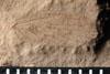 http://mczbase.mcz.harvard.edu/specimen_images/entomology/paleo/large/PALE-10069_Lemmatophera_typa_etho.jpg