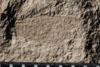 http://mczbase.mcz.harvard.edu/specimen_images/entomology/paleo/large/PALE-10072_Lemmatophora_typa_dry.jpg