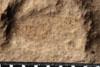 http://mczbase.mcz.harvard.edu/specimen_images/entomology/paleo/large/PALE-10072_Lemmatophora_typa_etho.jpg