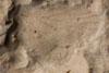 http://mczbase.mcz.harvard.edu/specimen_images/entomology/paleo/large/PALE-10106_Lemmatophora_typa_etho.jpg