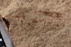 http://mczbase.mcz.harvard.edu/specimen_images/entomology/paleo/large/PALE-10111_Lemmatophora_typa_etho.jpg