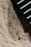 http://mczbase.mcz.harvard.edu/specimen_images/entomology/paleo/large/PALE-10113_Lemmatophora_typa_scale.jpg