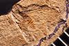 http://mczbase.mcz.harvard.edu/specimen_images/entomology/paleo/large/PALE-1014_Schizoneuroides_scudderi_type.jpg