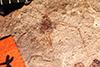 http://mczbase.mcz.harvard.edu/specimen_images/entomology/paleo/large/PALE-1034_Siphonophoroides_antiqua_type.jpg