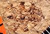 http://mczbase.mcz.harvard.edu/specimen_images/entomology/paleo/large/PALE-1089_Palaphrodes_cincta_holotype.jpg