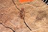 http://mczbase.mcz.harvard.edu/specimen_images/entomology/paleo/large/PALE-1115_Gypona_cinercia_holotype_1.jpg