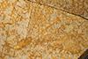http://mczbase.mcz.harvard.edu/specimen_images/entomology/paleo/large/PALE-11474a_Tarsophlebia_eximia.jpg