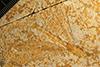 http://mczbase.mcz.harvard.edu/specimen_images/entomology/paleo/large/PALE-11474b_Tarsophlebia_eximia.jpg