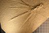http://mczbase.mcz.harvard.edu/specimen_images/entomology/paleo/large/PALE-11485_Stenophlebia_amphitrite.jpg