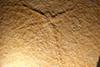http://mczbase.mcz.harvard.edu/specimen_images/entomology/paleo/large/PALE-11500_Tarsophlebia_eximia_(cp_11499).jpg