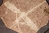 http://mczbase.mcz.harvard.edu/specimen_images/entomology/paleo/large/PALE-1156_Tipula_magnifica_type.jpg