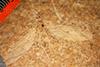 http://mczbase.mcz.harvard.edu/specimen_images/entomology/paleo/large/PALE-1167_Tipula_rigens_type.jpg
