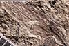 http://mczbase.mcz.harvard.edu/specimen_images/entomology/paleo/large/PALE-1186_Spiloblattina_triassica_syntype.jpg