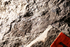 http://mczbase.mcz.harvard.edu/specimen_images/entomology/paleo/large/PALE-1193_Petrablattina_aequa_syntype_2.jpg