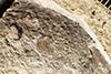 http://mczbase.mcz.harvard.edu/specimen_images/entomology/paleo/large/PALE-1195_Petrablattina_aequa_type_(cp_1196).jpg