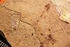 http://mczbase.mcz.harvard.edu/specimen_images/entomology/paleo/large/PALE-1214_Tipula_florissanta_type.jpg