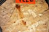 http://mczbase.mcz.harvard.edu/specimen_images/entomology/paleo/large/PALE-1222_Tipula_florissanta_type.jpg
