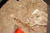 http://mczbase.mcz.harvard.edu/specimen_images/entomology/paleo/large/PALE-1231_Tipula_florissanta_type.jpg