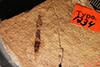 http://mczbase.mcz.harvard.edu/specimen_images/entomology/paleo/large/PALE-1234_Tipula_florissanta_type.jpg
