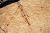 http://mczbase.mcz.harvard.edu/specimen_images/entomology/paleo/large/PALE-1289_Tipulidea_picta_type.jpg