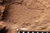 http://mczbase.mcz.harvard.edu/specimen_images/entomology/paleo/large/PALE-13026_Artinska_clara_etho.jpg