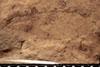 http://mczbase.mcz.harvard.edu/specimen_images/entomology/paleo/large/PALE-13035_Artinska_clara_etho.jpg
