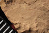 http://mczbase.mcz.harvard.edu/specimen_images/entomology/paleo/large/PALE-13039_Artinska_clara_etho.jpg